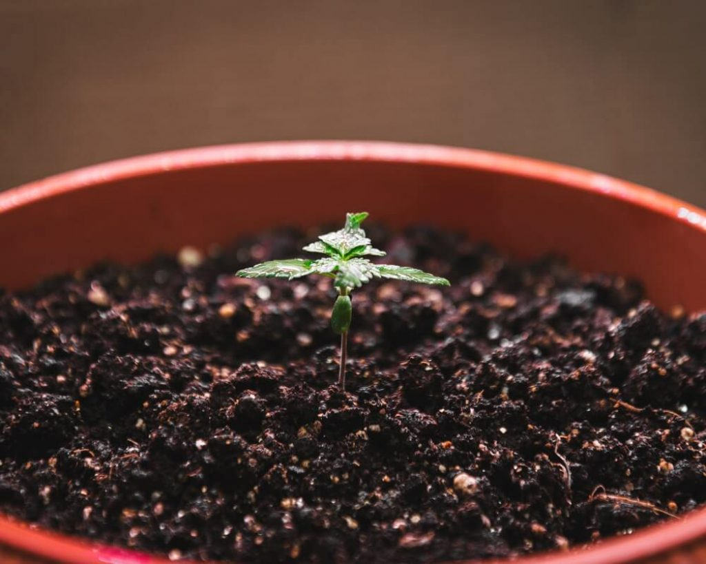 Guide To Soil Selection For Growing Marijuana