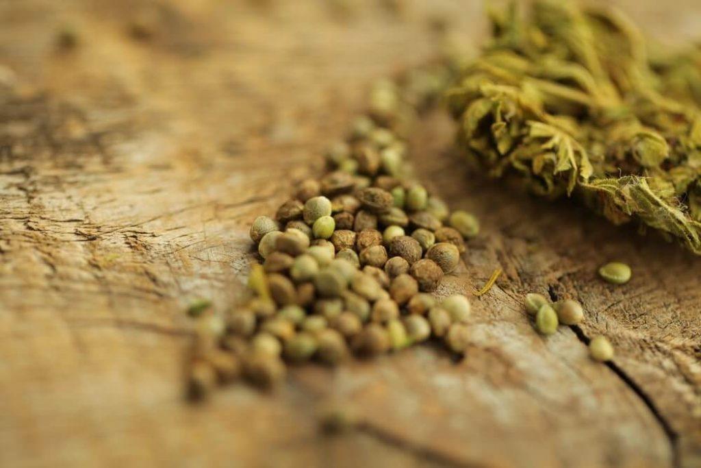 Cannabis hemp and seeds on a table