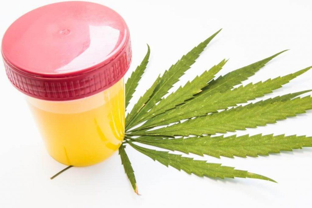 Cannabis or marijuana urine test