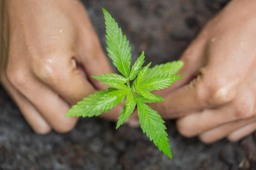 Guide to Germinating Seedlings