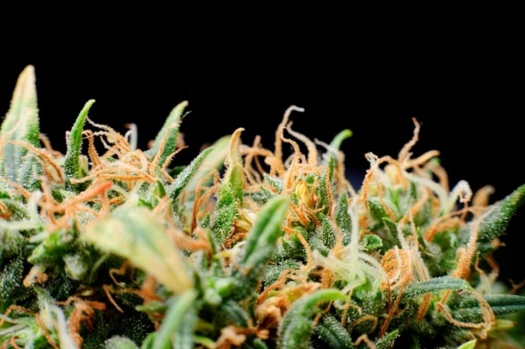 Cheap Hydroponic nutrients for Growing Weed