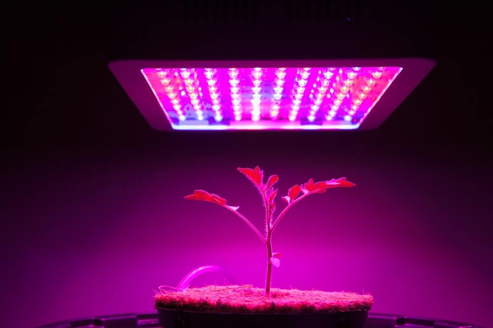 Grow Light Comparison - Mars Hydra vs Viparspectra