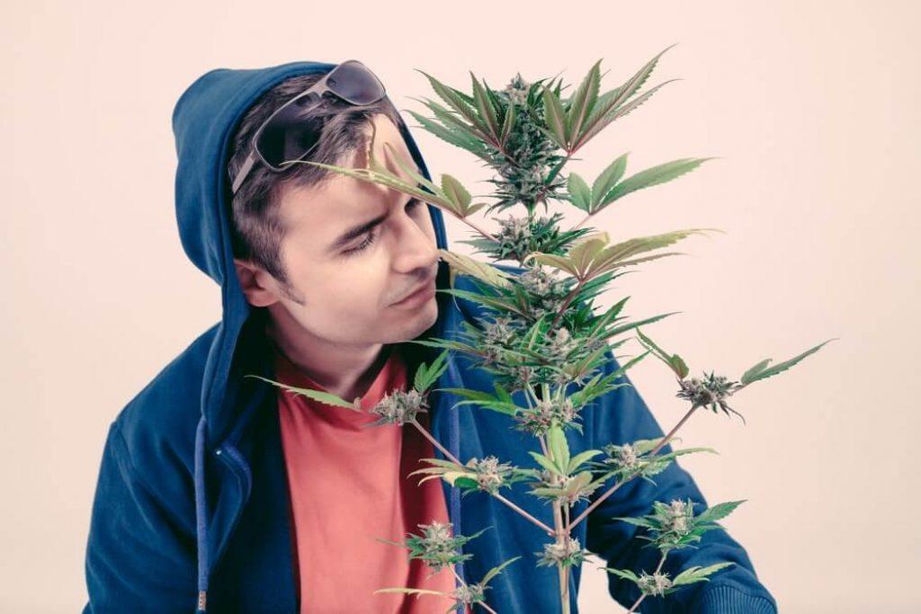 Man smelling Cannabis plant