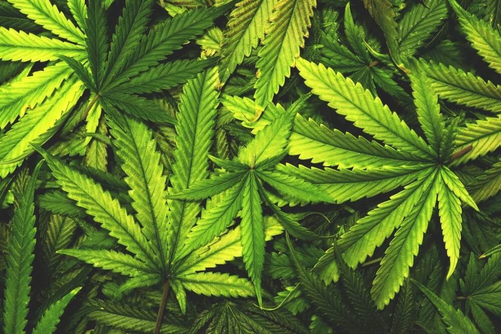 Best Bloom Booster for Growing Cannabis