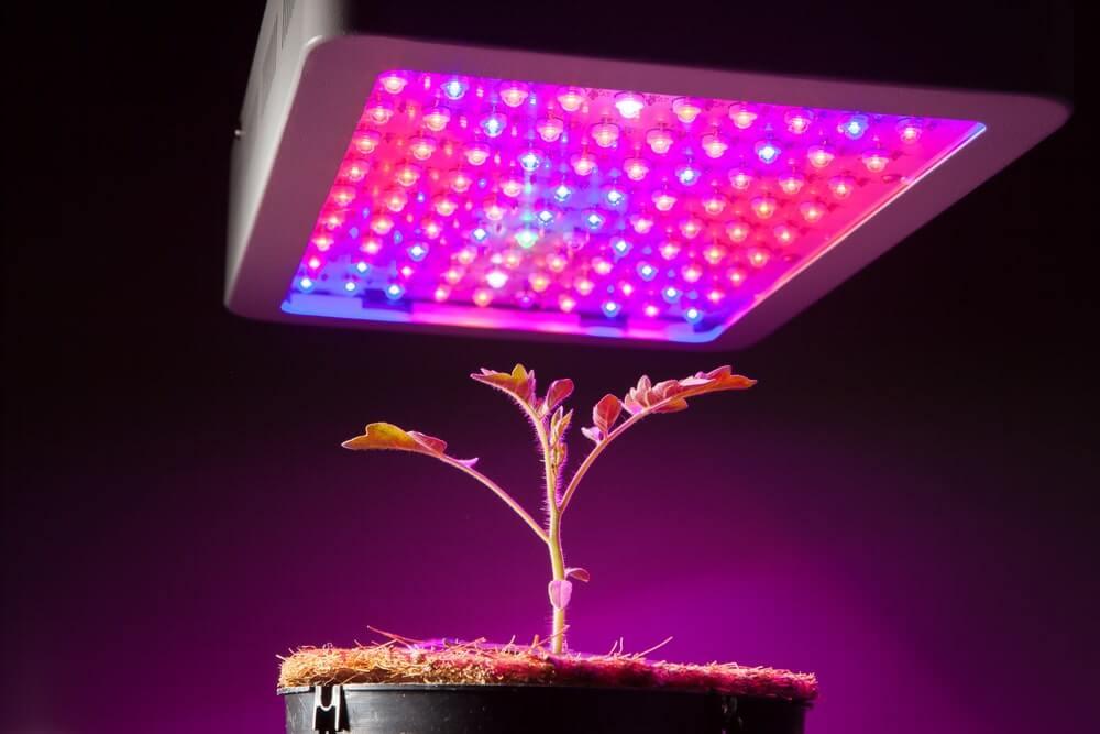 Full Spectrum Grow Light Guide