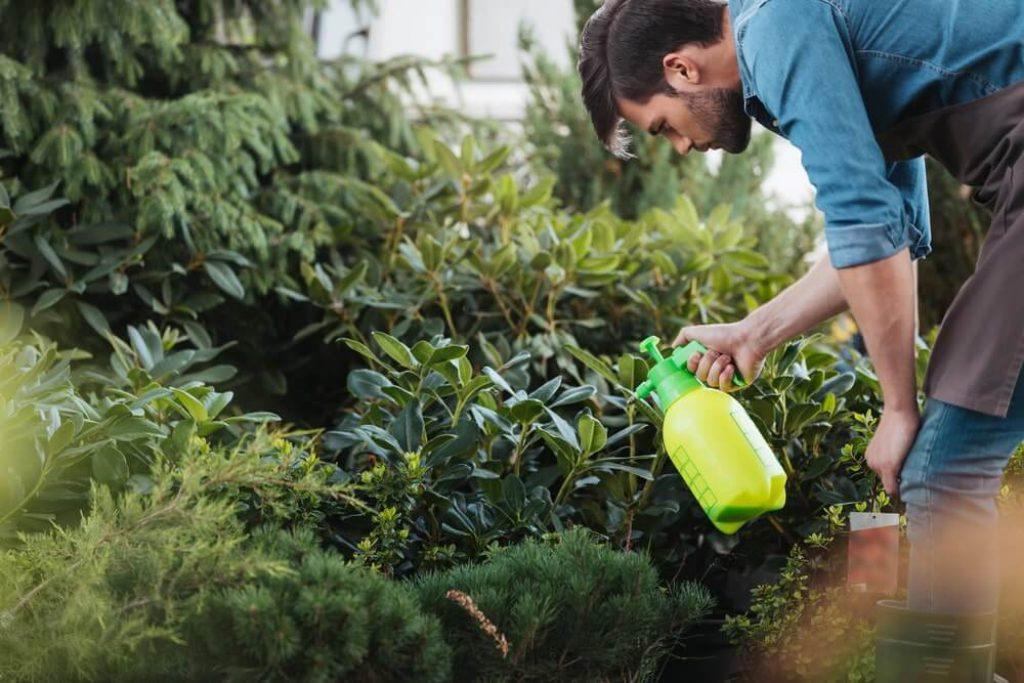 Gardener spraying plants in garden