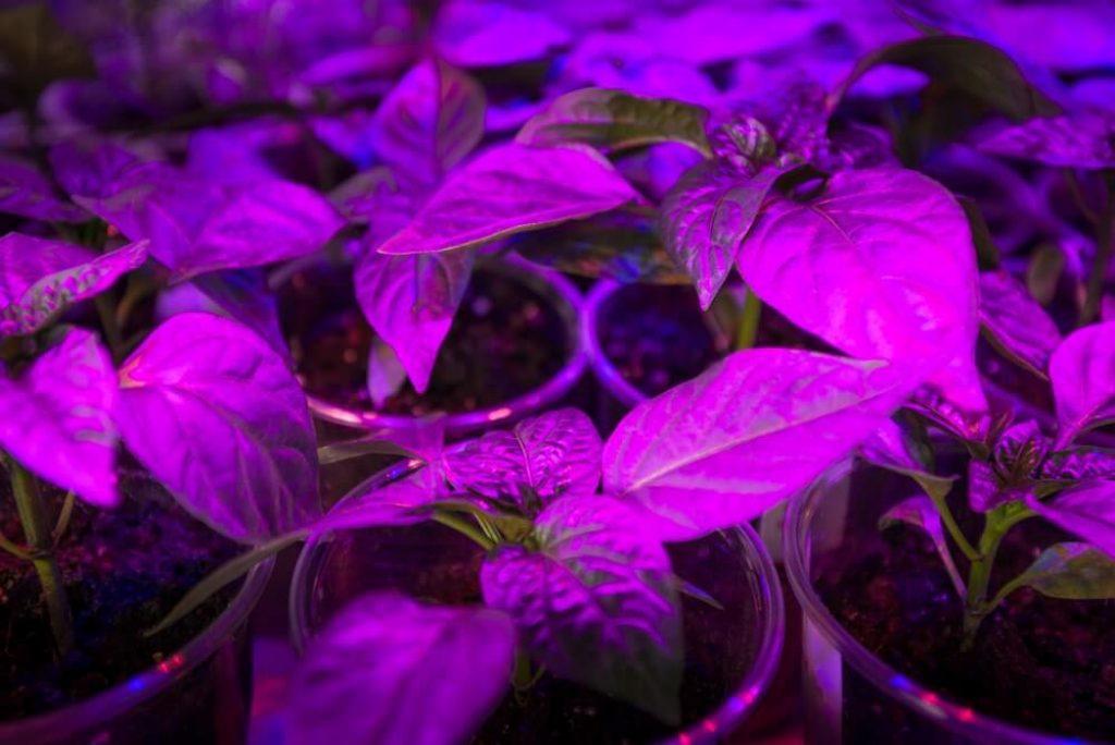 LED lighting Grow plants