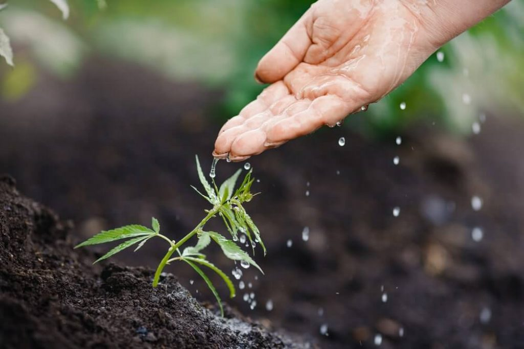 How Much Water Does Your Plant Need?