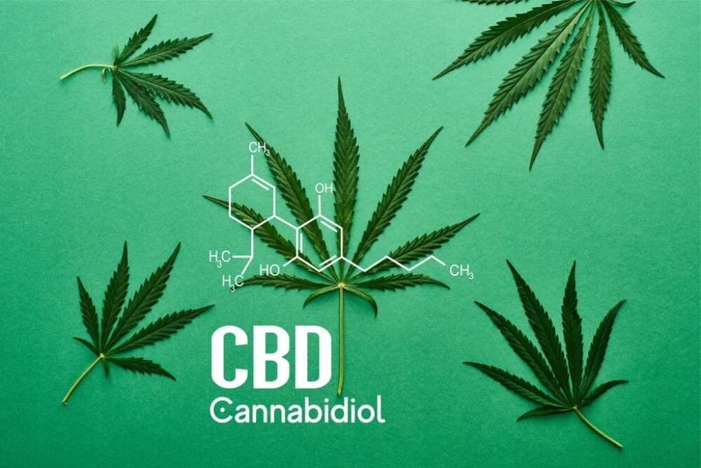 Top view of green cannabis leaves on green background
