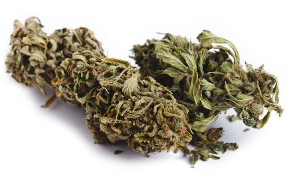 Isolated Cannabis Buds