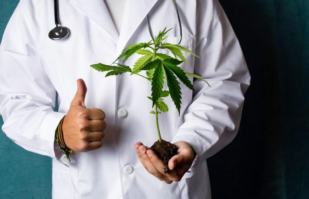 Scientist holding a marijuana branch close up