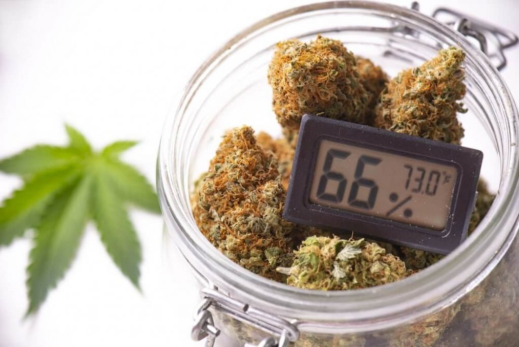 Cannabis buds on clear glass jar with humidity gauge isolated