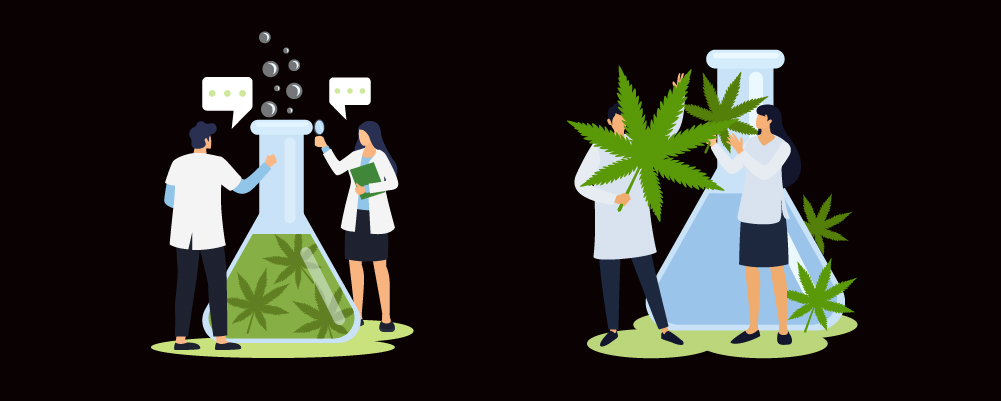 Doctors Studying Cannabis