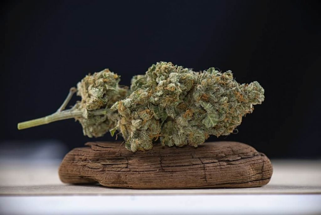 How Are Marijuana Leaves Different From the Buds?