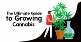 The Ultimate Guide to Growing Cannabis