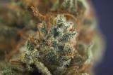 Can You Smoke Fresh Weed