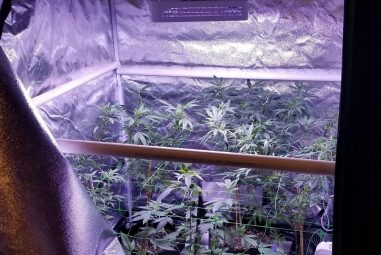Grow Tent vs Space Bucket – How to Choose